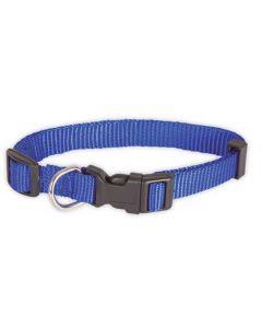 collier pour chien, bleu
