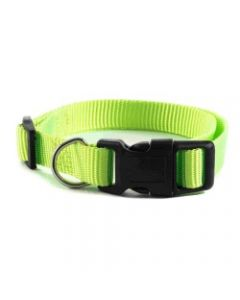 collier pour chien, vert