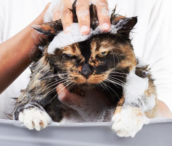 bain de chat