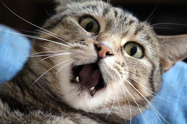 stress chez les chats