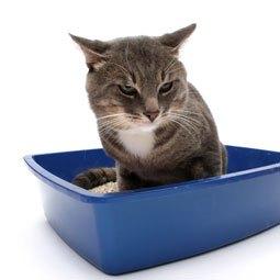trouble urinaire de chat