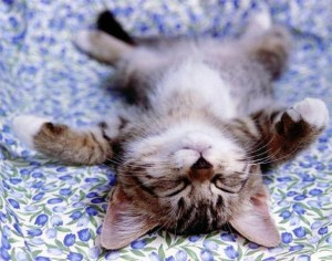 chat relaxe