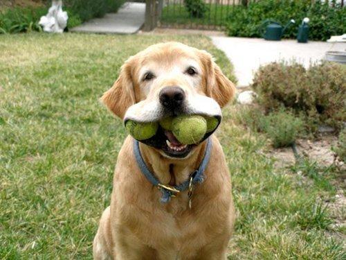 chien joue balle