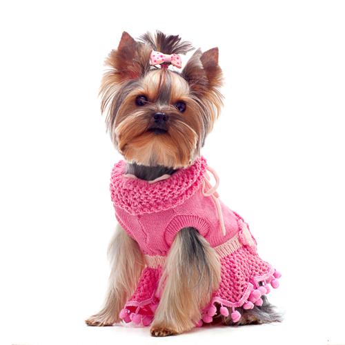 robe chien
