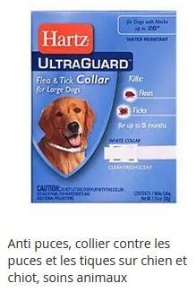 collier antipuces des chiens