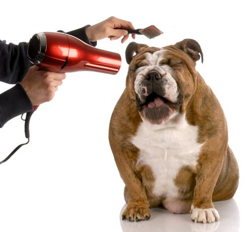 sécher un chien